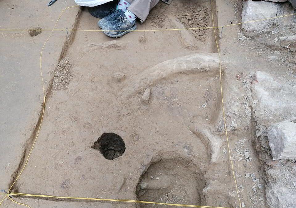 V Milovicích našli kosterní pozůstatky mamutů, soba i koně