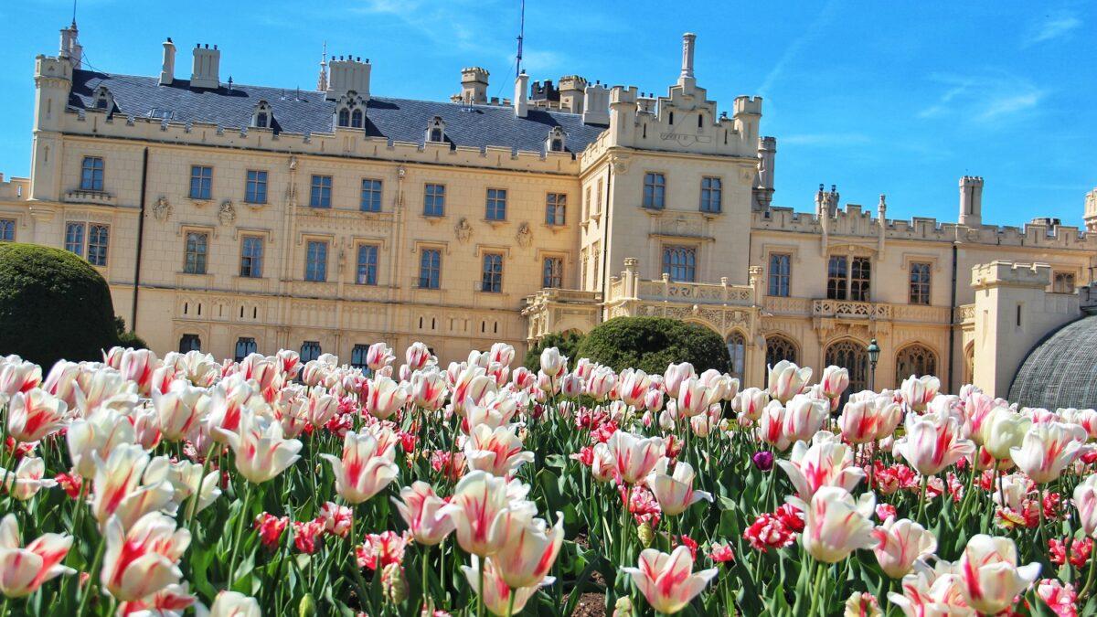 FOTO: Zámecký park v Lednici zdobí tisíce rozkvetlých tulipánů