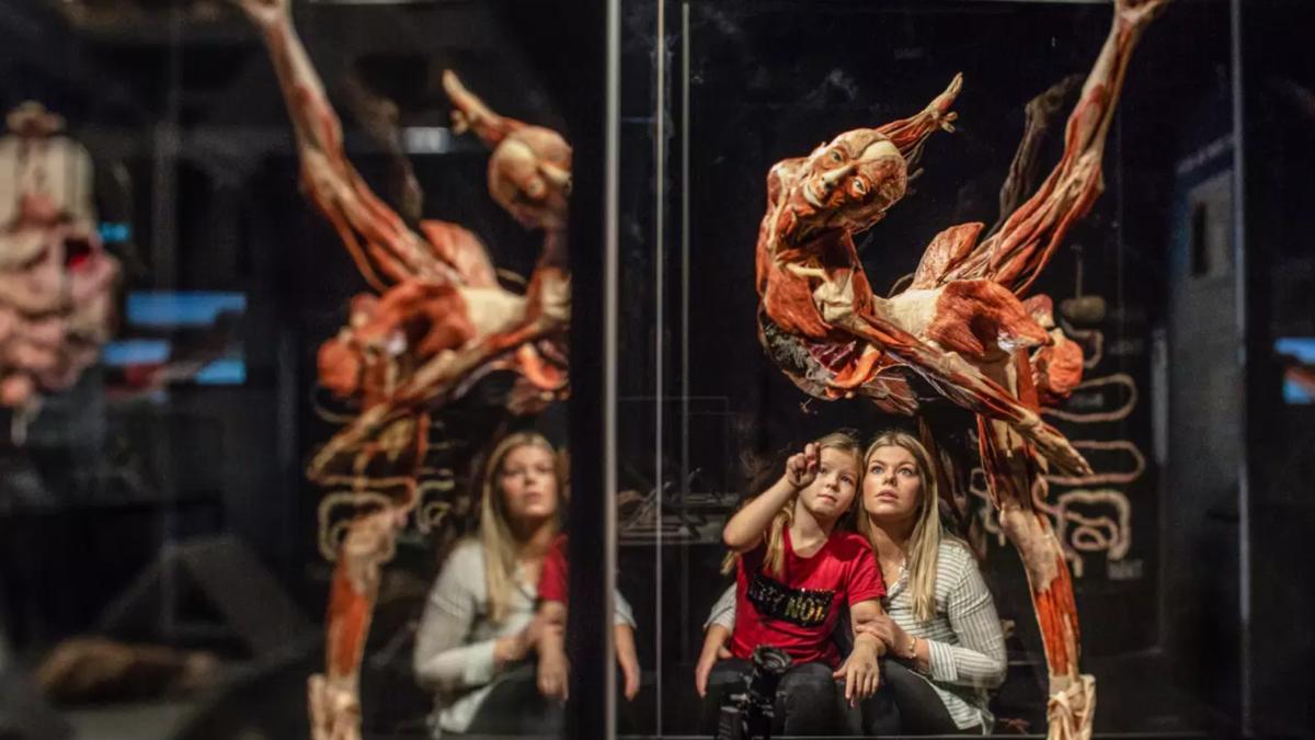 Světová výstava Body Worlds láká do Brna na preparovaná těla