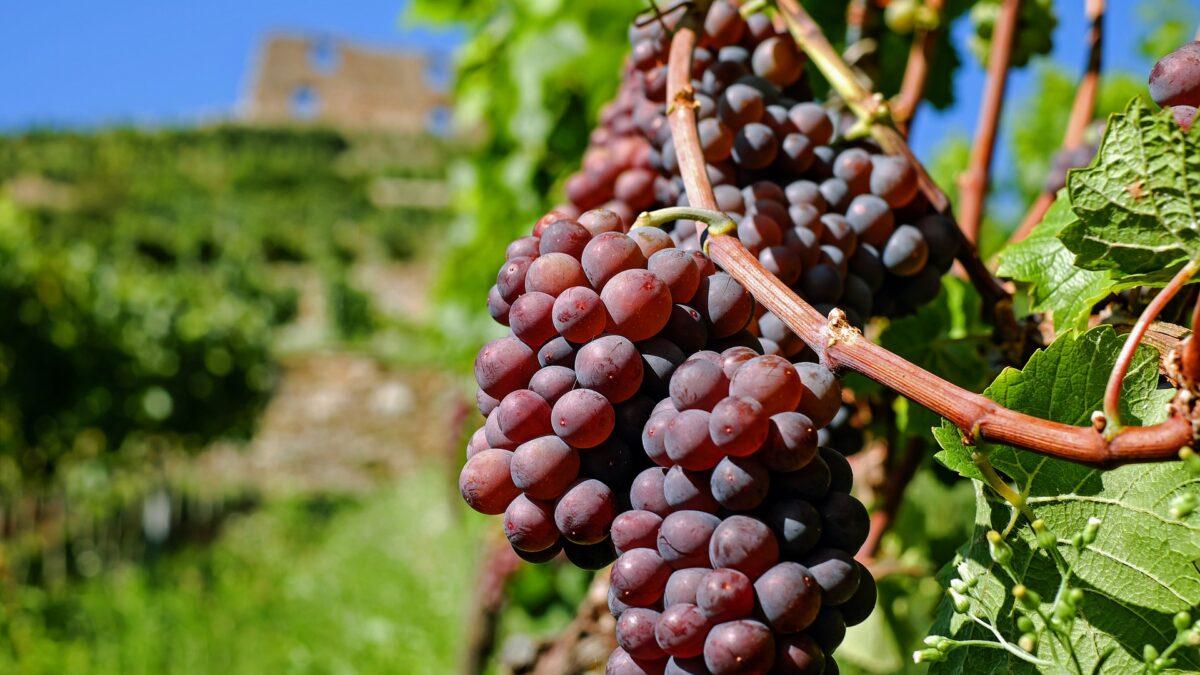 Otevřené sklepy Kyjovska nabídnou návštěvu 29 vinařství