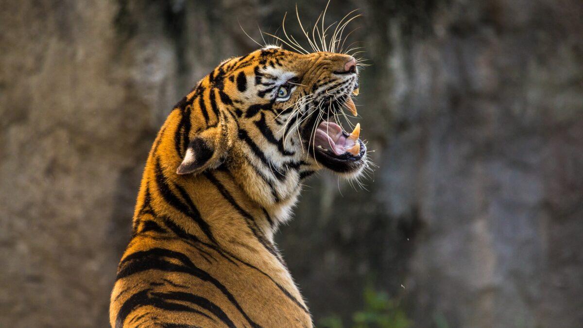 Nebezpečná zvířata neutekla, informuje Zoo Hodonín