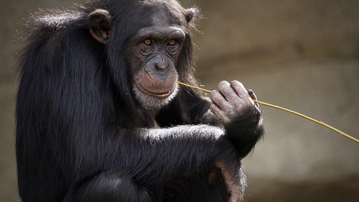 Hodonínská zoo již brzy otevře veřejnosti