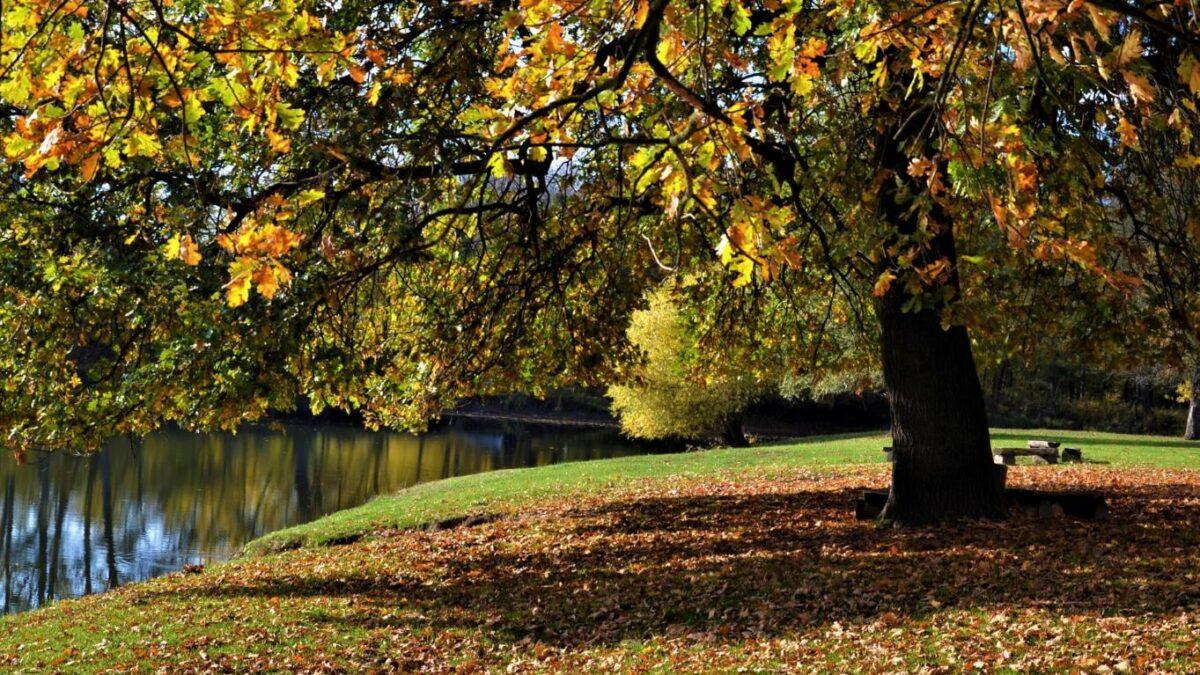 Tento rok vychází první podzimní den na: 22.Září 2021 v 21:21h