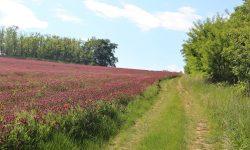 Jetelová pole obarvila jižní Moravu. Foto: ILJM/Tomáš Kucej