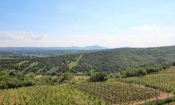Rozhledna Kraví Hora. Foto: ILJM/Tomáš Kucej