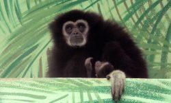 Mládě gibona lar oživilo dosud zavřenou zahradu. Foto: Zoo Hodonín